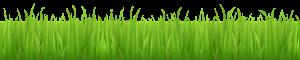bottom_grass