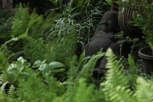 Fernery + Herb Garden