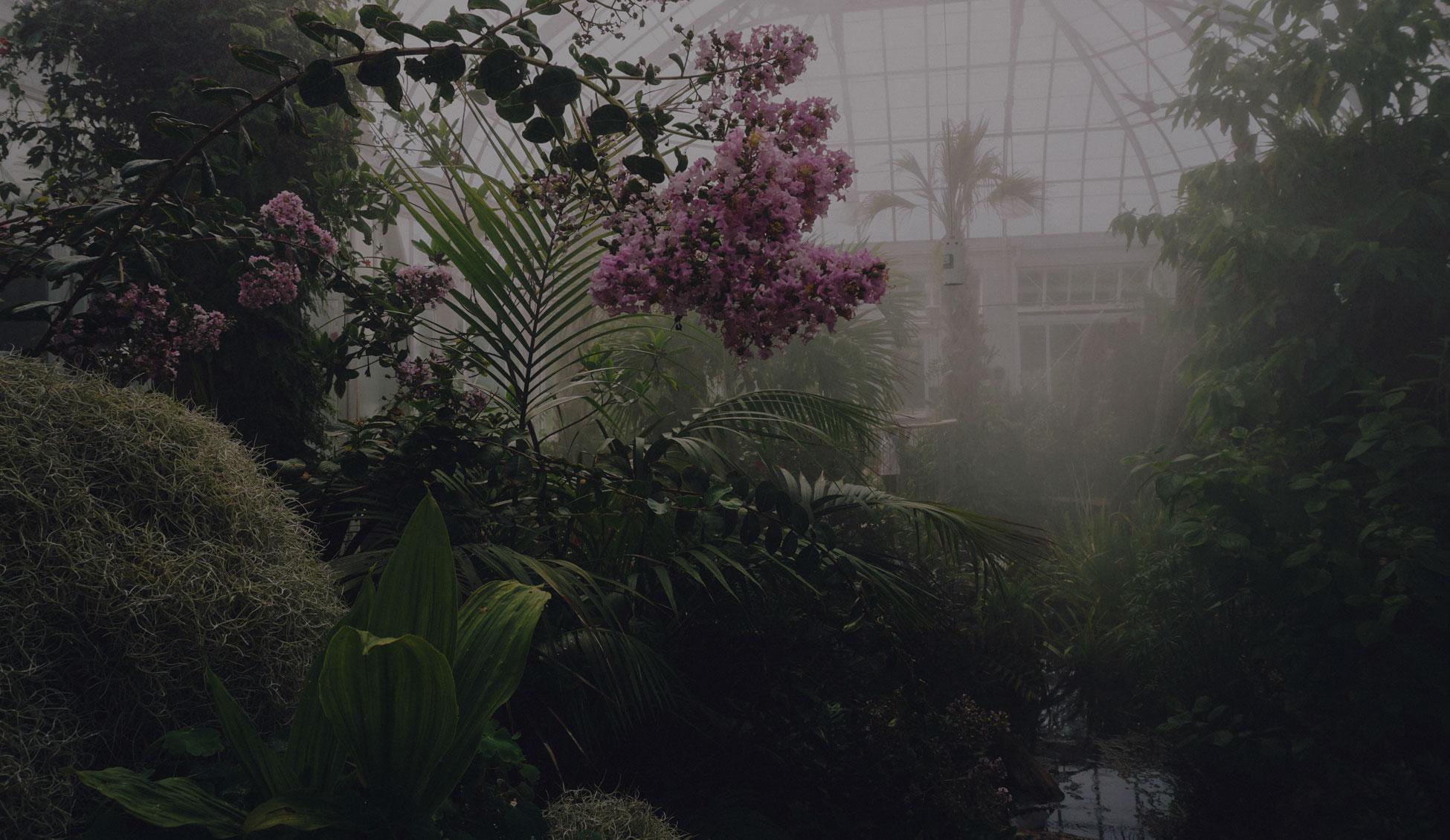 low-maintenance-indoor-outdoor-plants