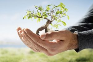 tree-transplantation-services