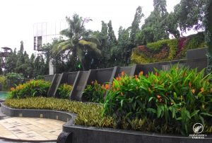 garden-maintenance-sahara-star-6