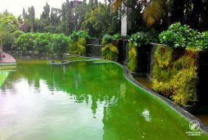 vertical-garden-design-sahara-star-2