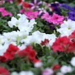 The Freshness of Flowers