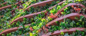 vertical-garden-achieve-corporate-greenscape