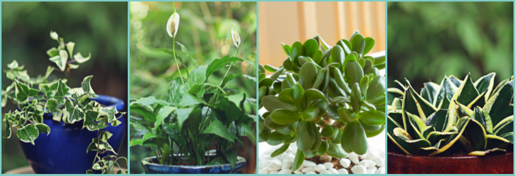 a-chance-to-experiment-with-seasonal-plants
