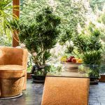 Breathe Fresh Air Indoors with these Houseplants