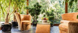 breathe-fresh-air-indoor-houseplant
