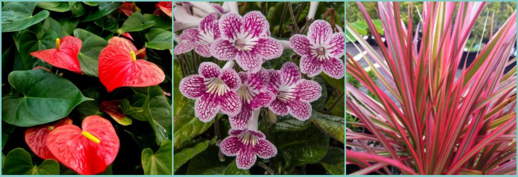exotic-plants