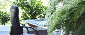 indoor-plants-transform-workspace
