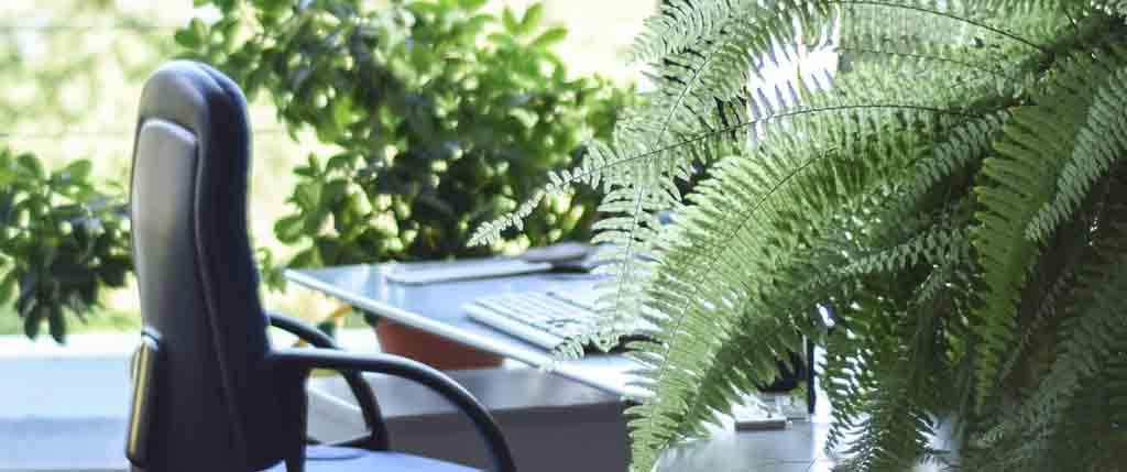 indoor-plants-transform-workspace