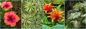 low-maintenance-plants