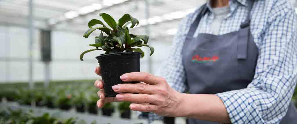 plant-rentals