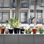 Here's why you need to rent a plant