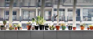 rent-a-plant