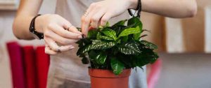 the-prospect-to-increase-your-plant-longevity-