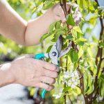 regular-pruning-enables-fresh-growth