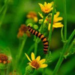 protect-plants-from-insects-and-pests