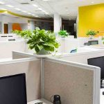 Impact of Plants on Workspace
