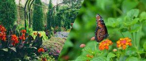 decorating-garden-in-monsoon
