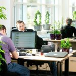 Pick Plants that Perfectly Complement & Improve the Office Environment