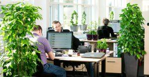 Office_Indoor_Plants