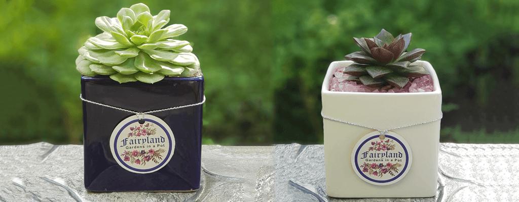 succulent-plants-ferntastica-gardens