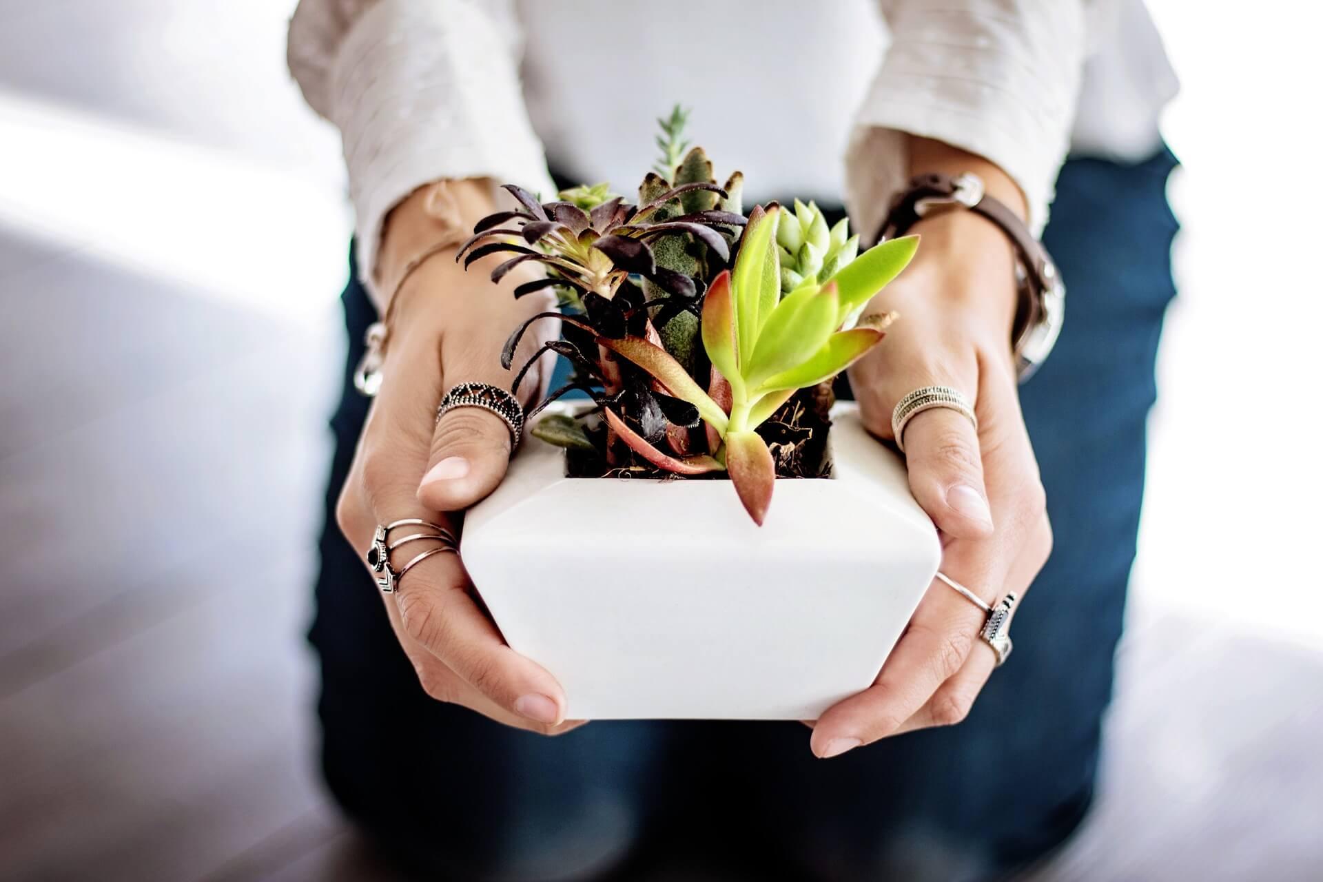 plant-gifting-ferntastica-gardens