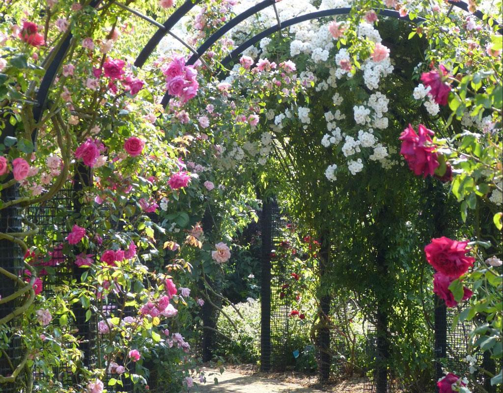 Vertical-Garden-Ideas-pergola-garden