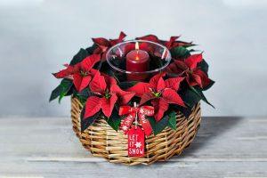 plant-gifting