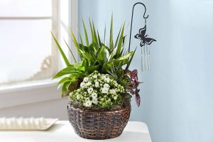 house-plant-for-gift