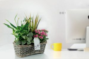corporate-plant-gift